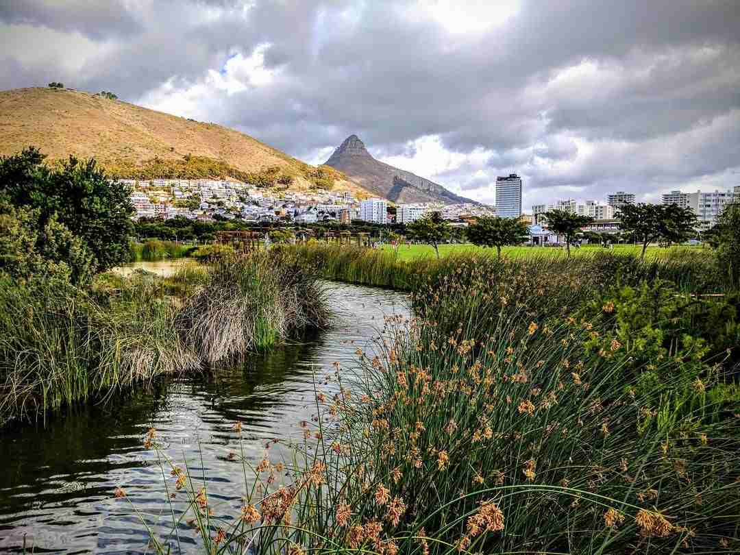 Image of a stream with greenery on either side with Signal Hill and Lion's Head in the background.