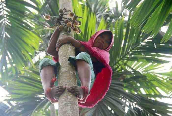 Cerita Sedih, Wanita Pemanjat Pohon Pinang, Demi Hidupi Keluarga