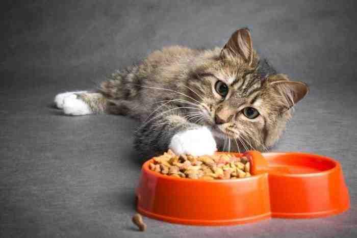 5 Makanan Kucing Bagus dan Murah