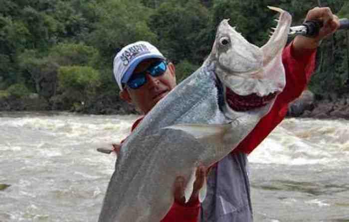 Ikan Buntal Habisi Nyawa Satu Keluarga, Pahami Jenis Ikan yang Tidak Boleh Dimakan