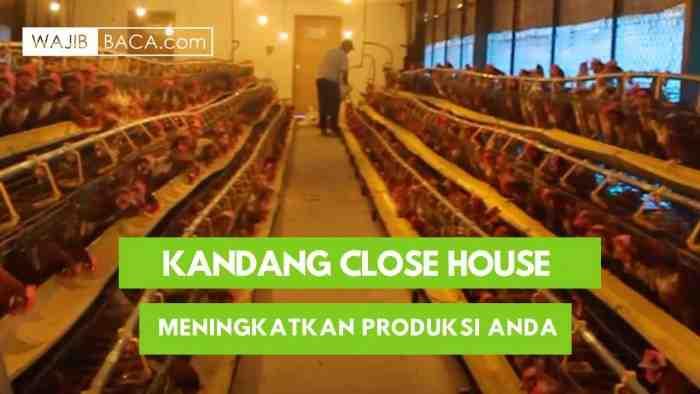 Kandang Ayam Close House Modern Serba Otomatis Solusi Bagi Peternak