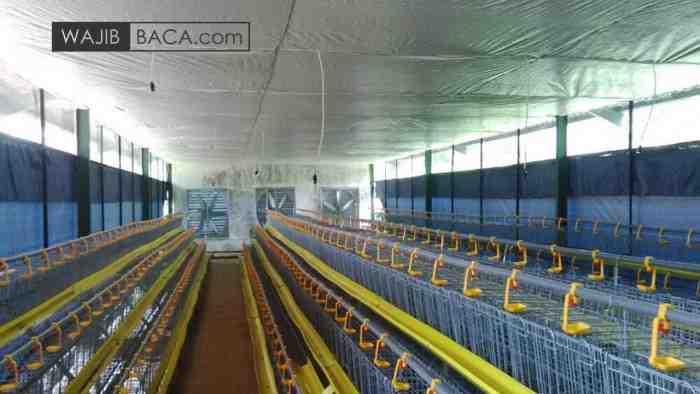 Jasa Pembuatan Kandang Ayam Close House Full Otomatis dan Modern