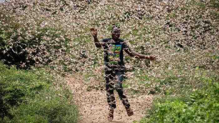 Ngeri, Belum Selesai dengan Virus Corona, China Terancam Wabah Belalang Afrika