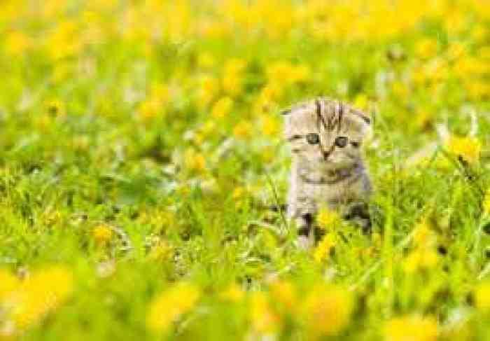 5 Rekomendasi Makanan Untuk Anak Kucing Anda