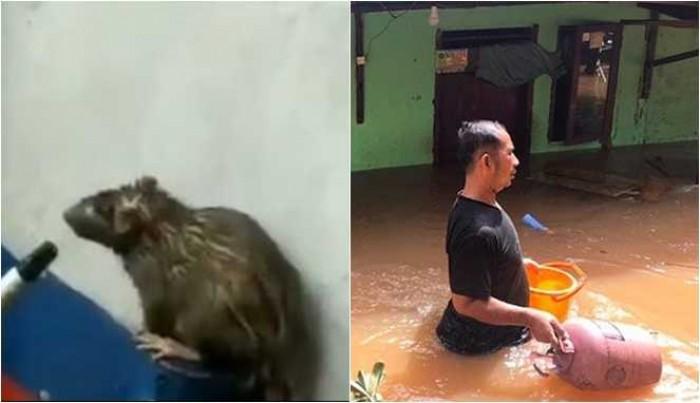 Waspada Marak Penyakit Leptospirosis Saat Banjir, ini Cara Mencegahnya