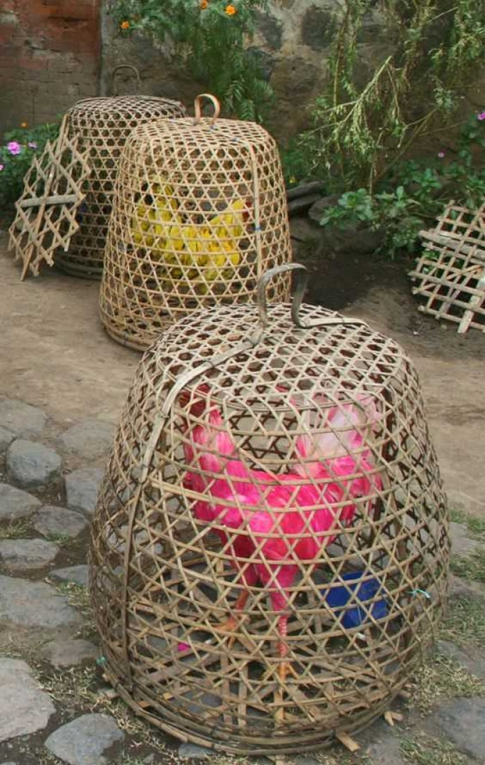 Analisa Peluang Usaha Kandang Ayam Bambu yang Menjanjikan dan Cara Membuatnya