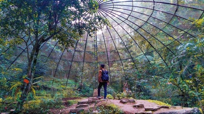5 Wisata yang Tak Kalah Indah Dari Kebun Teh Puncak Bogor