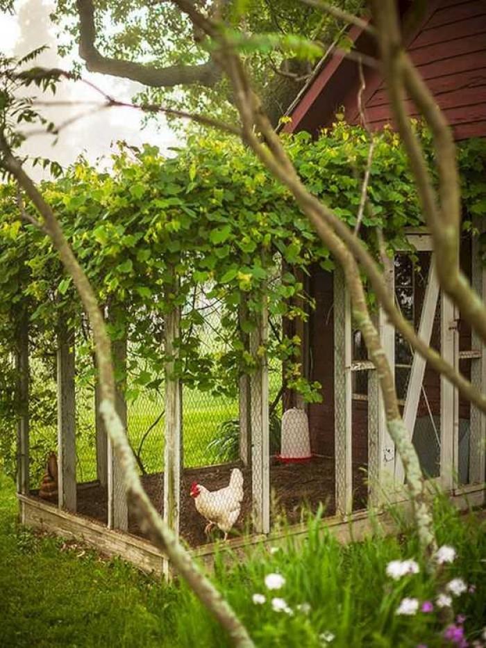 7 Ide Desain Kandang Ayam Bangkok, Petelur yang Sederhana