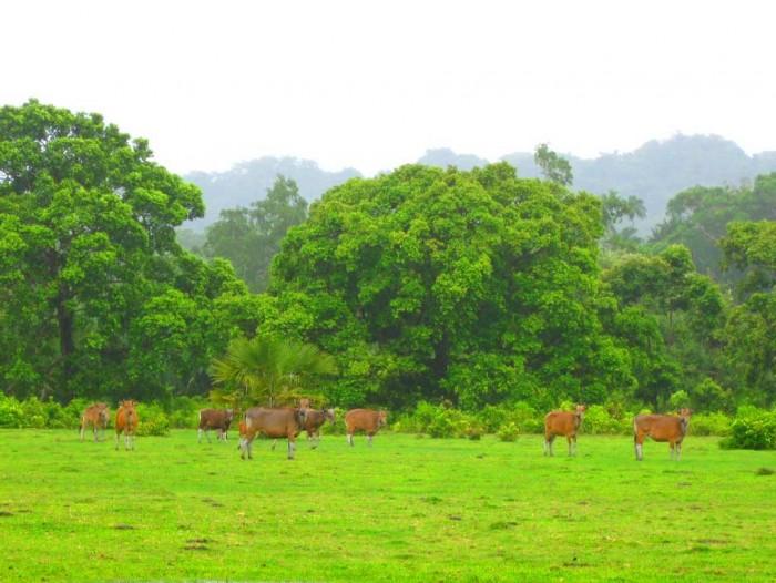 Destinasi Wisata di Taman Nasional Ujung Kulon