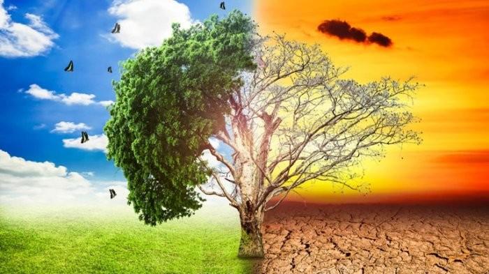 Efek Rumah Kaca : Pengertian, Penyebab, Efek, dan Contoh