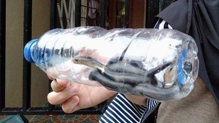 Di Sukoharjo, 31 Ekor Anak Ular Kobra Ditemukan di Lipatan Karpet Masjid At Taqwa