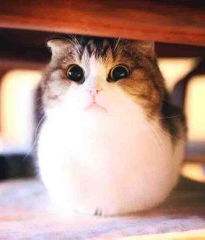 5 Makanan Penggemuk Kucing Kesayangan Kamu