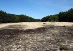 Jedna z wydm w południowej części parku