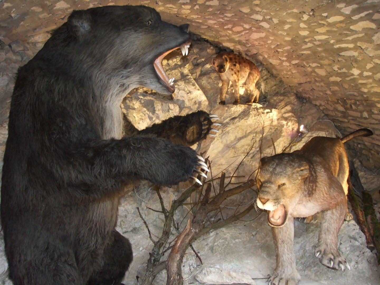 Modele zwierząt jaskiniowych - ekspozycja w pawilonie wejściowym