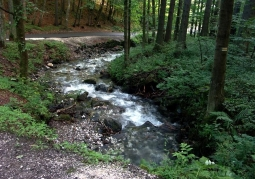 Rzeka Kleśnica na terenie rezerwatu