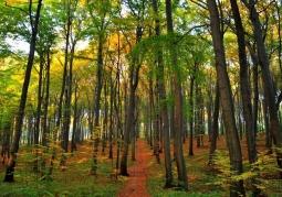 Zdjęcie: Bytom - Rezerwat buków Segiet