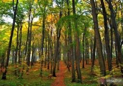 Rezerwat przyrody Segiet