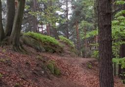 Las w Ciężkowicach