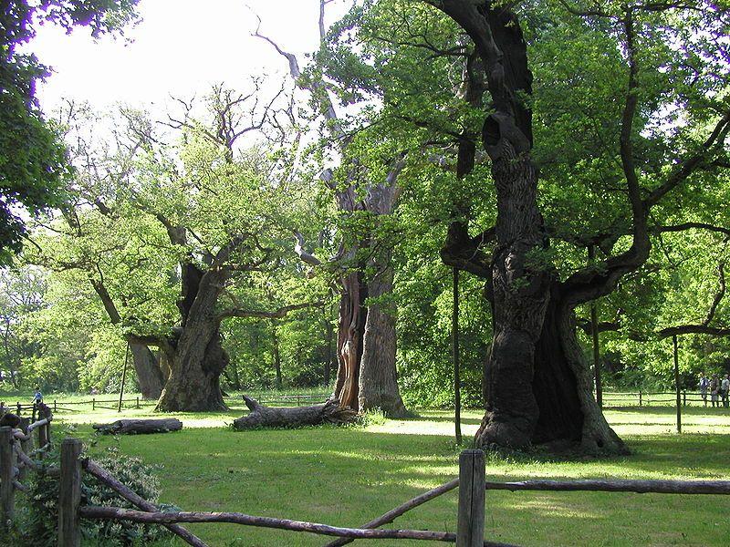 Rogaliński Park Krajobrazowy