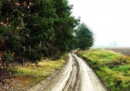 Pejzaż okolic Rogalinka