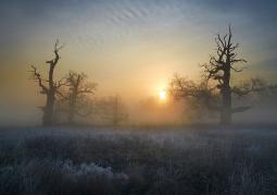 Rogaliński Park Krajobrazowy o poranku