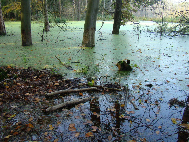 Rezerwat przyrody Bórbagno Miałka