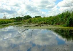 Jeziora cedyńskie