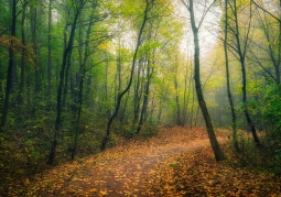 Bielańsko -Tyniecki Park Krajobrazowy