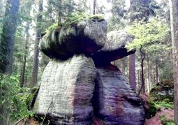 rock mushrooms