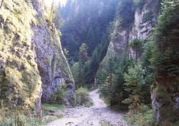 Szlak przebiegający przez wąwóz