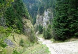 Szopczański Gorge - Pieniny National Park