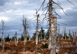 Wymarły las