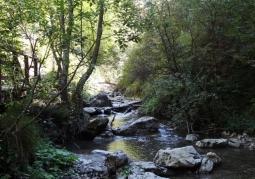 Homole Gorge Reserve