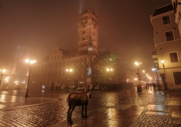Old Town Hall in the fog