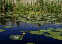 Rezerwat przyrody Kanał Kwiatowy