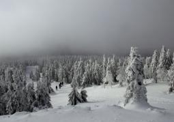 Rezerwat zimą