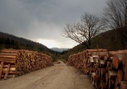 Drewno przy ścieżkach w parku