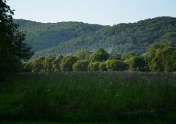 Rezerwat przyrody Zakole - Park Krajobrazowy Doliny Sanu