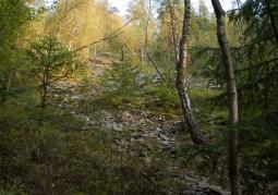 Rezerwat przyrody Gołoborze - Ciśniańsko-Wetliński Park Krajobrazowy