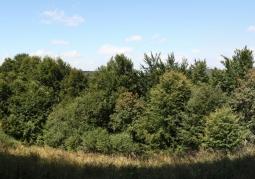 Rezerwat przyrody Olszyna Łęgowa w Kalnicy - Ciśniańsko-Wetliński Park Krajobrazowy