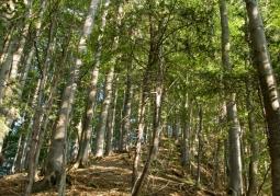 Rezerwat przyrody Woronikówka - Ciśniańsko-Wetliński Park Krajobrazowy