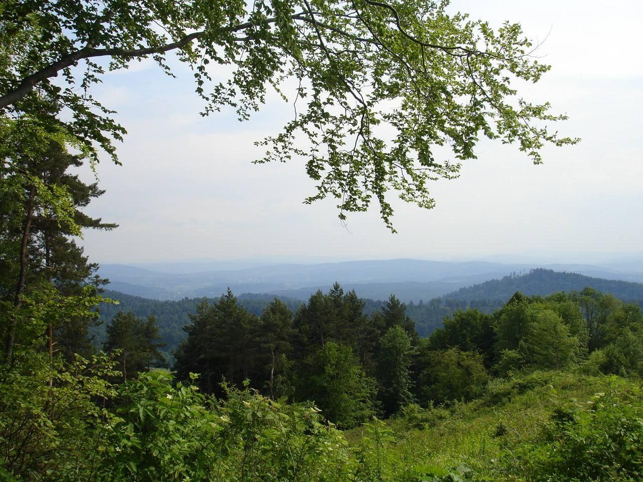 Rezerwat przyrody Buczyna w Wańkowej