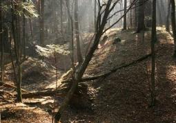 Rezerwat przyrody Chwaniów - Park Krajobrazowy Gór Słonnych