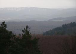 Rezerwat przyrody Nad Trzciańcem - Park Krajobrazowy Gór Słonnych