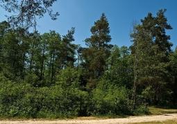 Rezerwat, widok od strony drogi