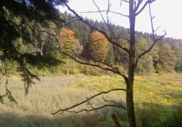 Obszary leśne rezerwatu