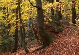 Obszar leśny jesienią