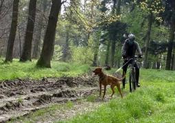 Psie zaprzęgi w warunkach bezśnieżnych - ekstremalna rozrywka z psami
