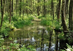 Rezerwat Czerwone Bagno