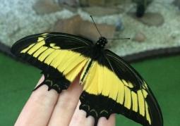 Muzeum Żywych Motyli Kraków